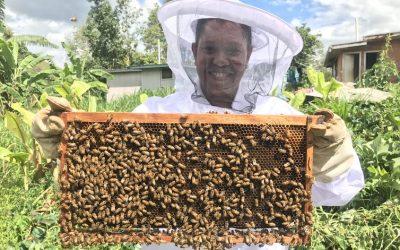 6 Suplemen Herbal Dari Lebah Untuk Mengatasi Penyakit Anda